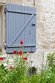 Mohnblumen vor Natursteinwand mit blaugrauem Fensterladen