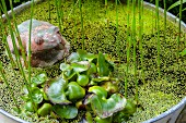 Vintage frog ornament amongst aquatic plants in zinc tub