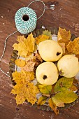 Autumnal still-life arrangement with quinces on sycamore leaves and reel of string