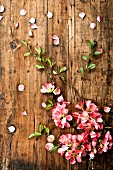 Quince blossom on wooden surface