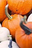 Orange and white pumpkins (close-up)
