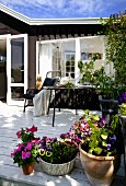 Potted plants, chairs and table on wooden terrace