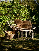 Round rattan easy chair with brown fur cushion next to basket of harvested fruit in garden