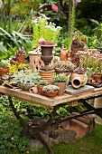 Alpines in terracotta pots on garden table with old folding frame