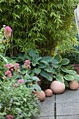 Spherical clay ornaments in front of potted hostas, some variegated