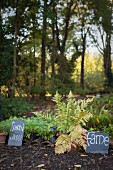 Perennials and ferns with hand-written signs in front of trees in morning sunlight