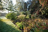 Clearing with low sun slanting through autumnal perennials and shrubs