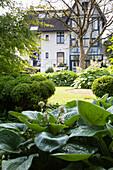 Im Vordergrund grossblättriger Hosta und Inseln aus formgeschnittenen Büschen im Garten vor Wohnhaus