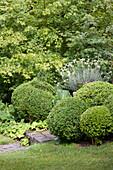 Formgeschnittene Buchsbaumkugeln am Gartenweg