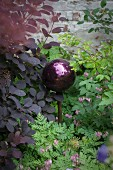 Dark purple ball amongst foliage plants and corydalis