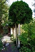 Row of trees lining narrow garden path