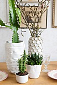 Cacti in various white ceramic pot on table