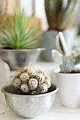Cactus in silver bowl