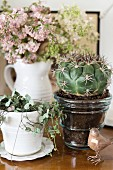 Still-life arrangement of foliage plant in white china pot, cactus in brown, glossy china pot, bird ornament and vase of flowers