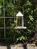 Vintage lantern on white trellis with green climbing plant