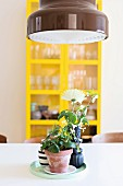 House plant and vases of flowers on tray below pendant lamp with brown-painted lampshade