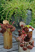 Rotbraun verfärbte Sempervivum eingepflanzt in rostigen Konservendosen, auf Gartentisch im Freien
