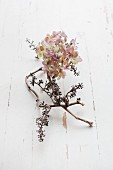 Dried hydrangea flower and dried grapevine on white wooden surface