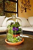Mini-Garten unter Glasglocke, auf Tisch in Wohnzimmerecke