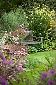 Secluded garden seating area; wooden bench amongst flowering bushes