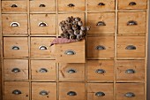 Poppy seed heads in open drawer of apothecary cabinet made from pale wood