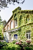 Flowering shrubs in summery garden of traditional house with climber-covered façade