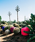 Colourful pouffes in landscape with large cacti