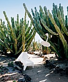 White modern plastic garden furniture in landscape full of cacti