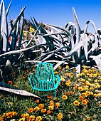 Turquoise outdoor armchair amongst desert flowers and agaves