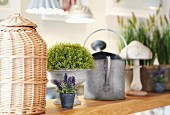 Wicker container, potted plants and watering can on wooden bench