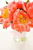 Salmon pink peonies in vase