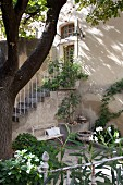 Oleander im Innenhof, im Hintergrund Ausschnitt eines Wohnhauses mit Aussentreppe