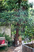 Wooden bench on paved floor next to potted tree in idyllic courtyard