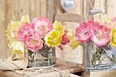 Tulipa 'Upstar' and 'Creme Upstar'