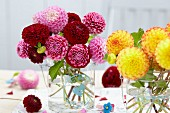 Pompon dahlias in vase