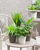 House plant arrangement