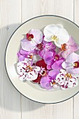 Moth orchid flowers in bowl of water