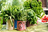 Kitchen herbs in tin cans covered in coloured paper or string
