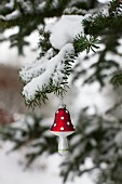 Toadstool Christmas bauble hanging from snowy fir branch