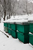 Snow-covered, sealed bee hives in snowy landscape