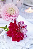 Bicoloured dahlia on lace doily