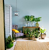 Green plants, individual leaves in vases and mini greenhouses on the shelf against a blue-tinted wall