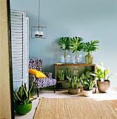 Grünpflanzen, einzelne Blätter in Vasen und Mini Gewächshäuser im Regal vor blau getönter Wand