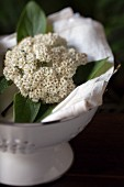 Elder flowers on white damask napkins in white colander