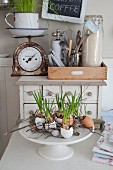Grape hyacinths planted in egg shells decorating Easter table, antique kitchen scales and vintage utensils on top of chest of drawers