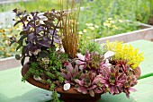 Various succulents and other plants planted in rusty dish