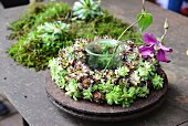 Pink flower in glass container in centre of succulent wreath on rusty metal dish