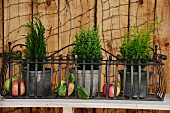 Potted plants and apples in wrought iron window box