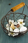 Sugar-coated chocolate eggs and pear blossom in wire basket