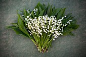 Bunch of lily-of-the-valley flowers and leaves on grey surface